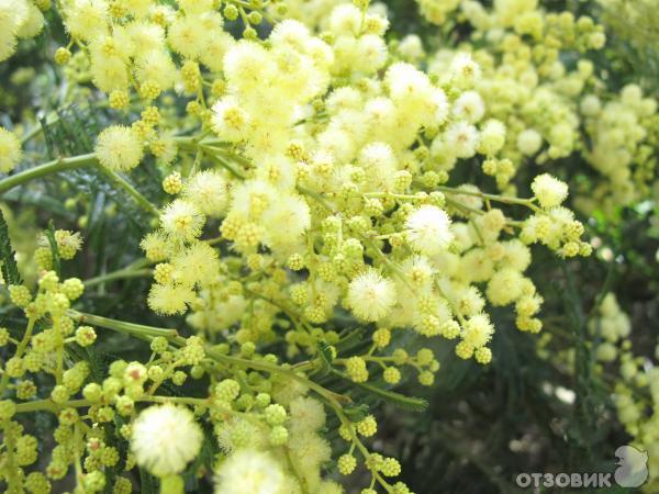 Австралийский Национальный ботанический сад (Австралия, Канберра) фото