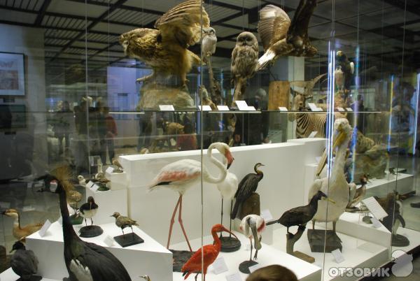 скачать самый большой музей в москве несовершенные манеры