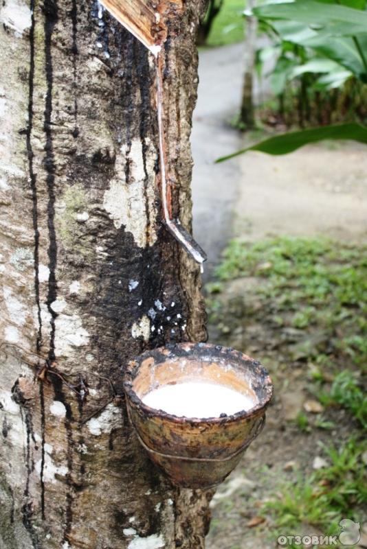 Купить матрас из латексаи кокоса детский матрас в кроватку из овечьей шерсти