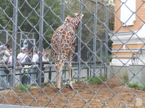 Московский Зоопарк (Россия