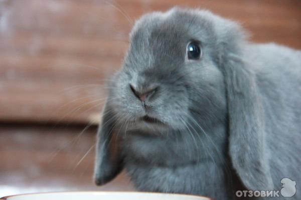 Отзыв о Кролик породы