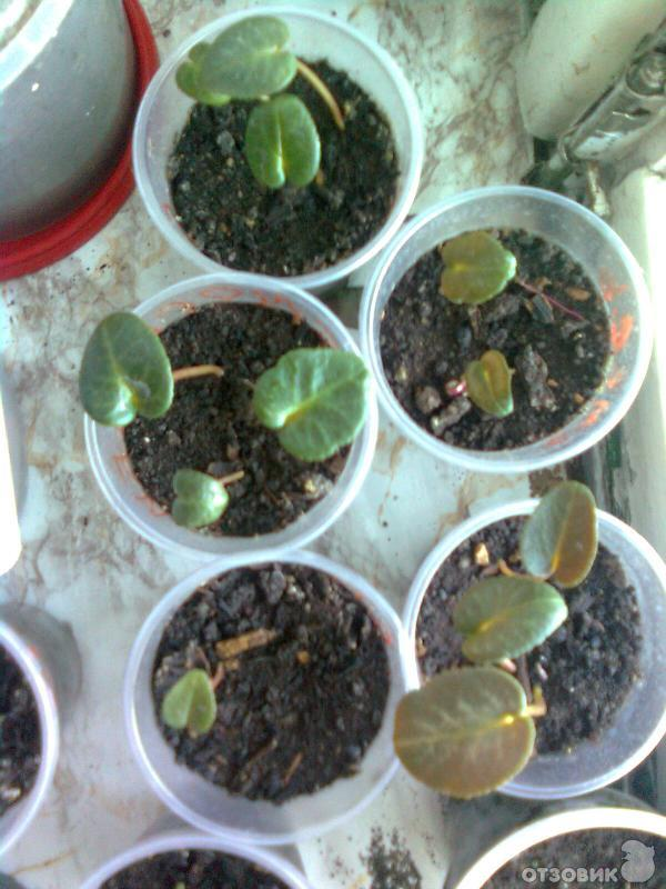 Семена для домашних цветов