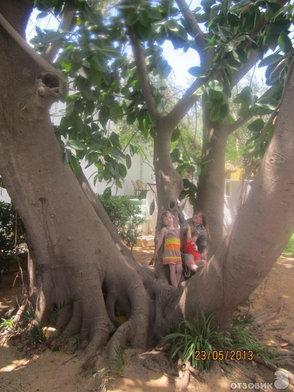 ...огромные фикусы, цветущие гранатовые деревья и кактусы, розовые кусты и разноцветные плети бугенвиллии придают...