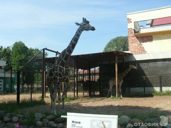 Зоопарк в санкт-петербурге где находится