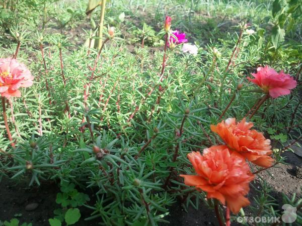 Цветок коврик