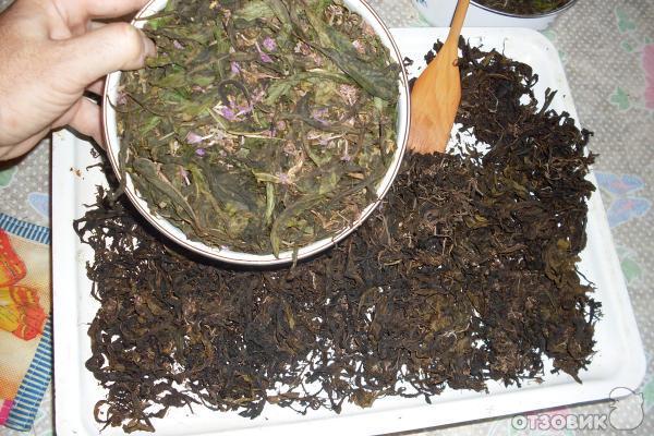 Иван чай - как собирать, сушить, приготовить 35