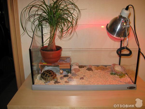 Как держать черепаху в домашних условиях - Naturapura.ru
