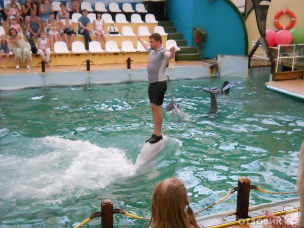 белье список дельфинариев в россии комбинезон можно