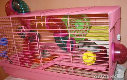 Джунгарский хомяк уход и содержание в домашних условиях
