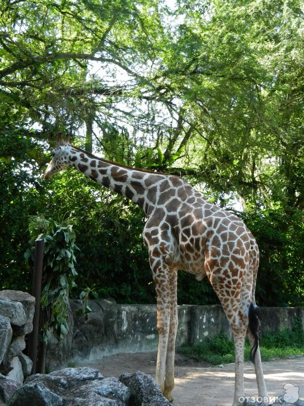 trip to the zoo essay