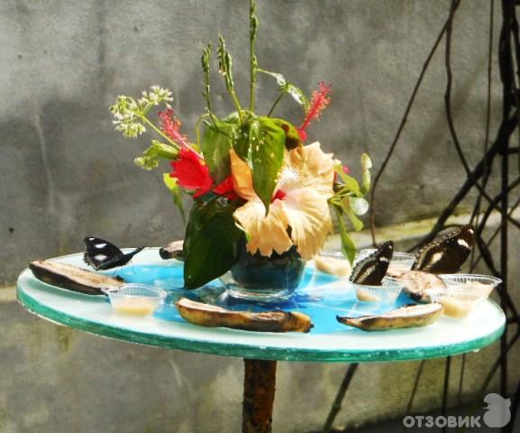 мебели, сад бабочек пхукет отзывы новый сервис