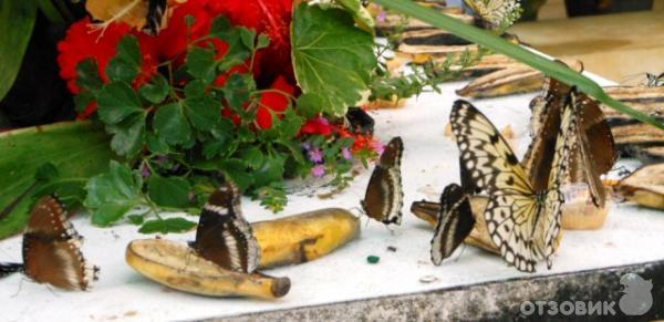 сад бабочек пхукет отзывы запчастей спецтехнику