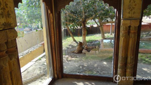 Зоопарк бенидорм отзывы