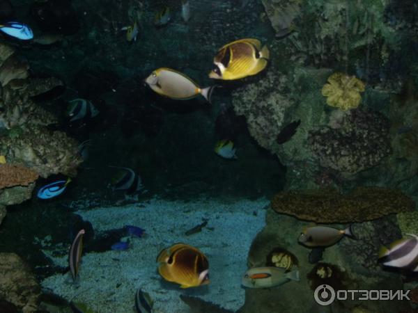 аквариум Барселона 8