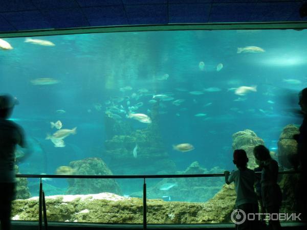 аквариум Барселона 13