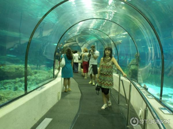аквариум Барселона 12