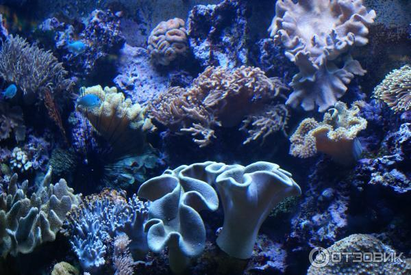 аквариум Барселона 6