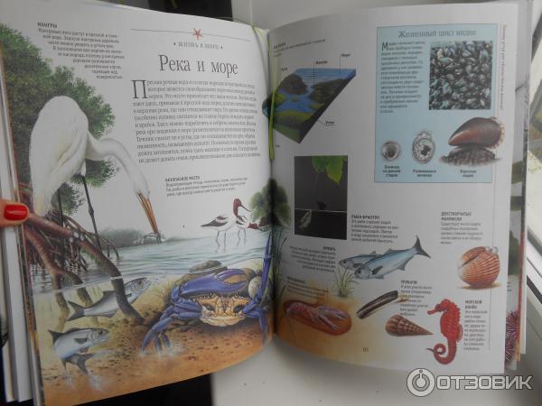 Сочинение на тему моя любимая книга о животных 8