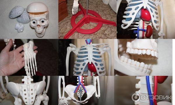 как собрать скелета артема инструкция
