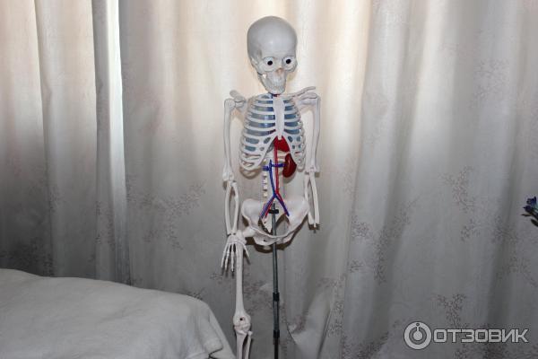 как собрать скелета артема инструкция - фото 5