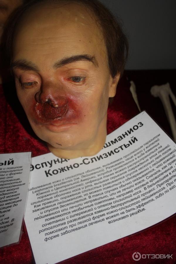 санкт петербург кунсткамера фото экспонатов