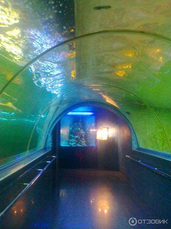 океанариум фото краснодар