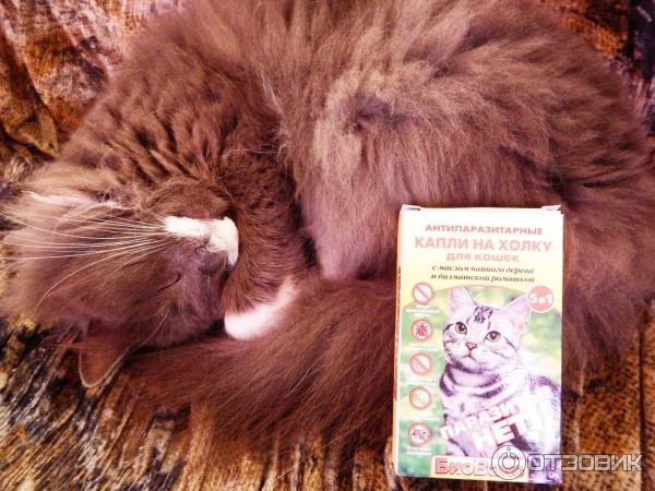 Масло чайного дерева от котов