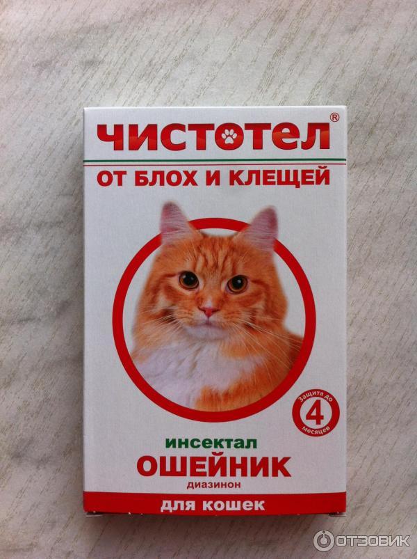 Как вылечить котенка от блох в домашних условиях 699