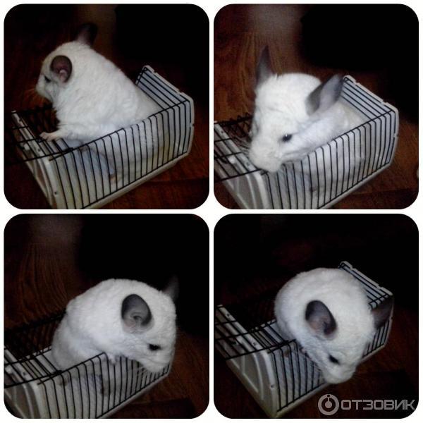 Переноски для кроликов своими руками