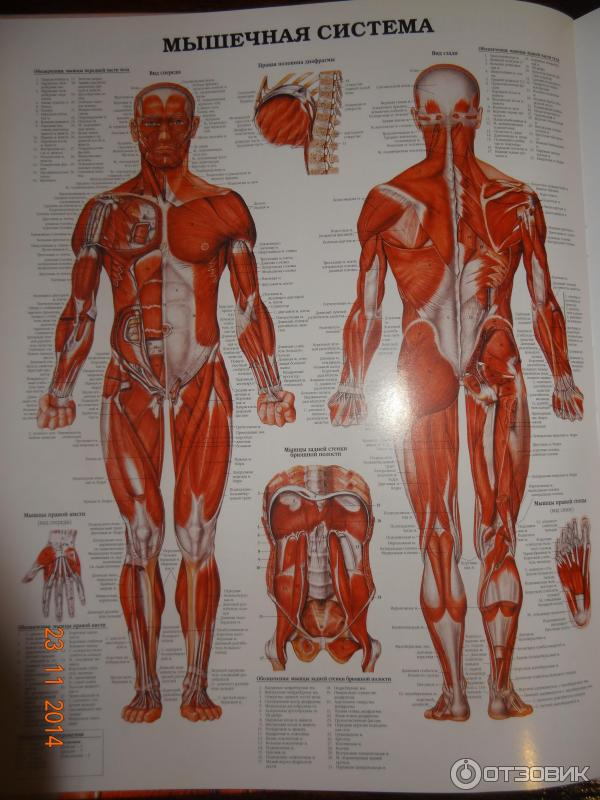 Human Anatomy Atlas Online Free Global Brain Soundsfo