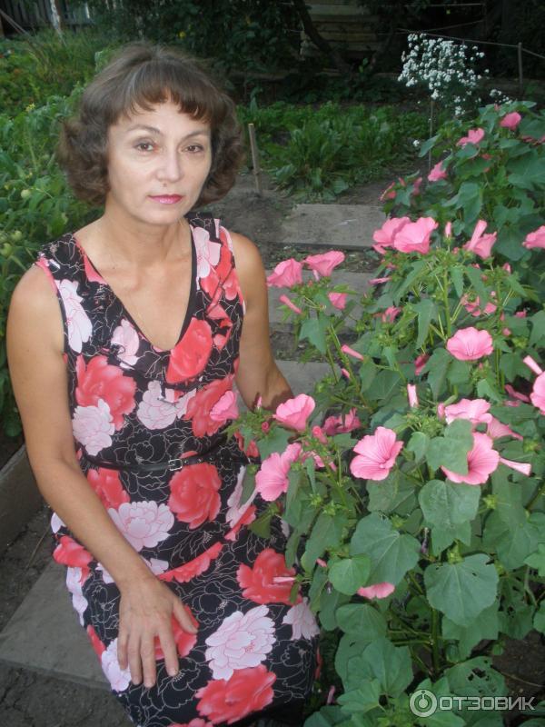 Садовый цветок лаватера