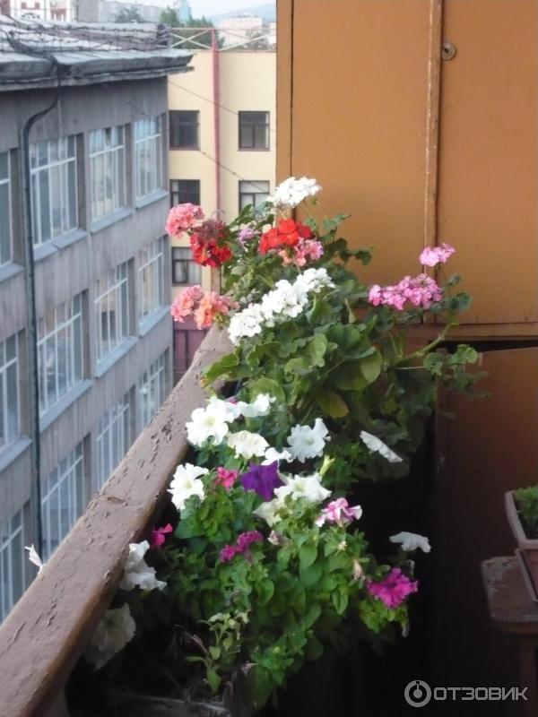 Ответы@mail.ru: какие цветы посадить на балконе? живу на сев.