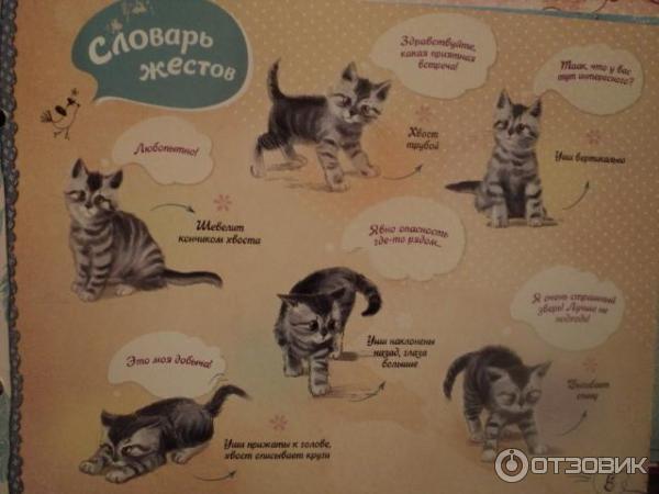 Что означают позы котов