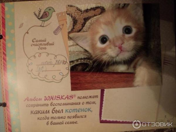 Корм Ontario для кошек - отзывы ветеринаров и владельцев