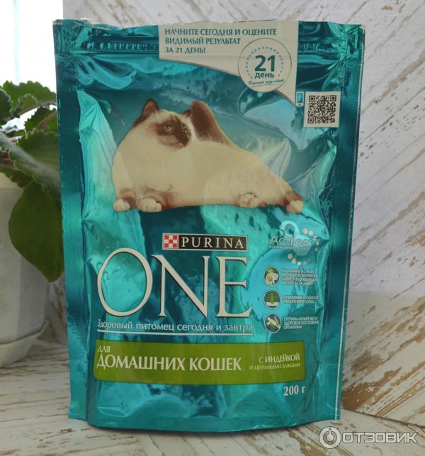 Лучший корм для щенка йорка? - запись пользователя alinka