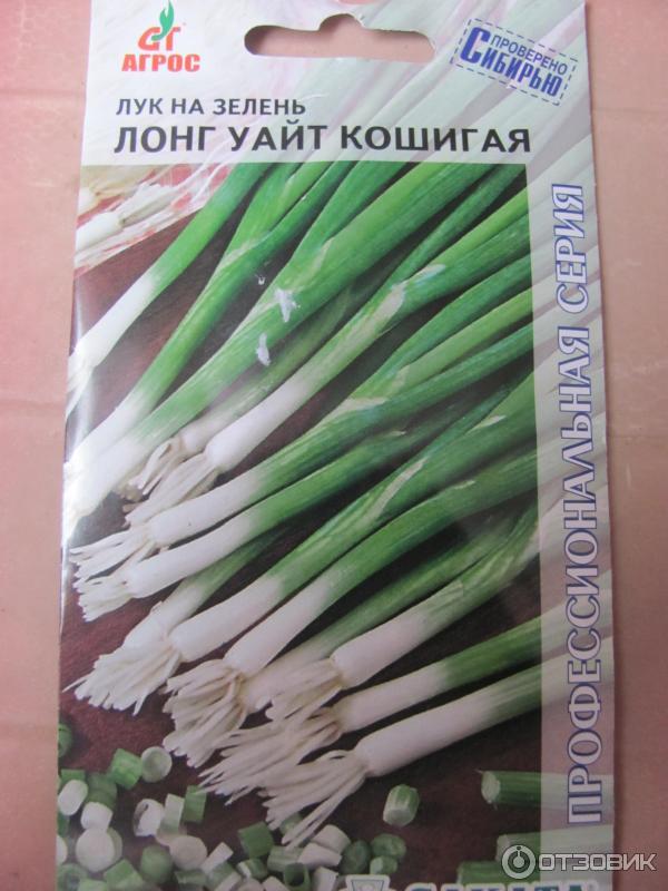 Лук семена на зелень сажать 852