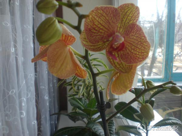 Цветок который долго цветет