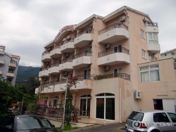 Магнолия бечичи черногория отзывы
