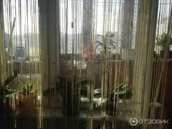 Отзыв о нитяные шторы кисея отличное решения для северных ок.