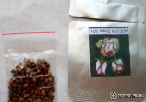 Как сажать розы семенами от алиэкспресс 347