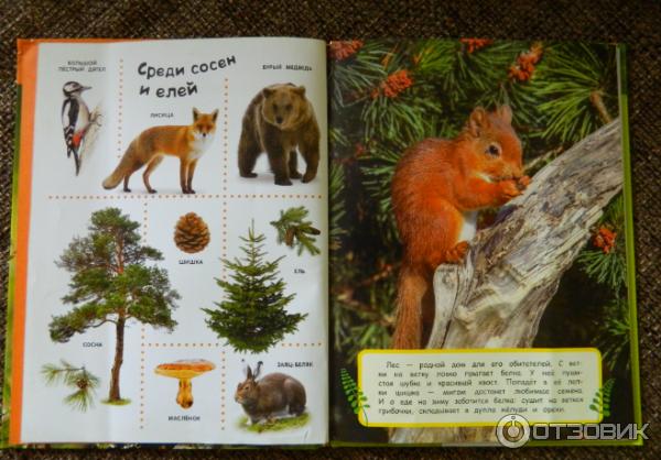 в лесу лучшая энциклопедия в картинках для малышей