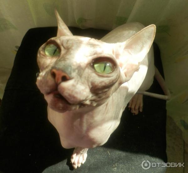 антисекс для кошек инструкция - фото 7
