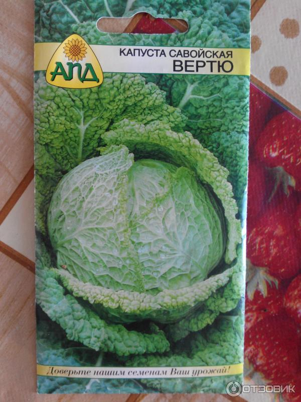 Савойская капуста выращивание отзывы 95