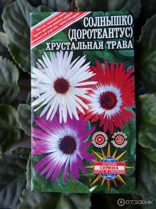 Цветы хрустальная трава