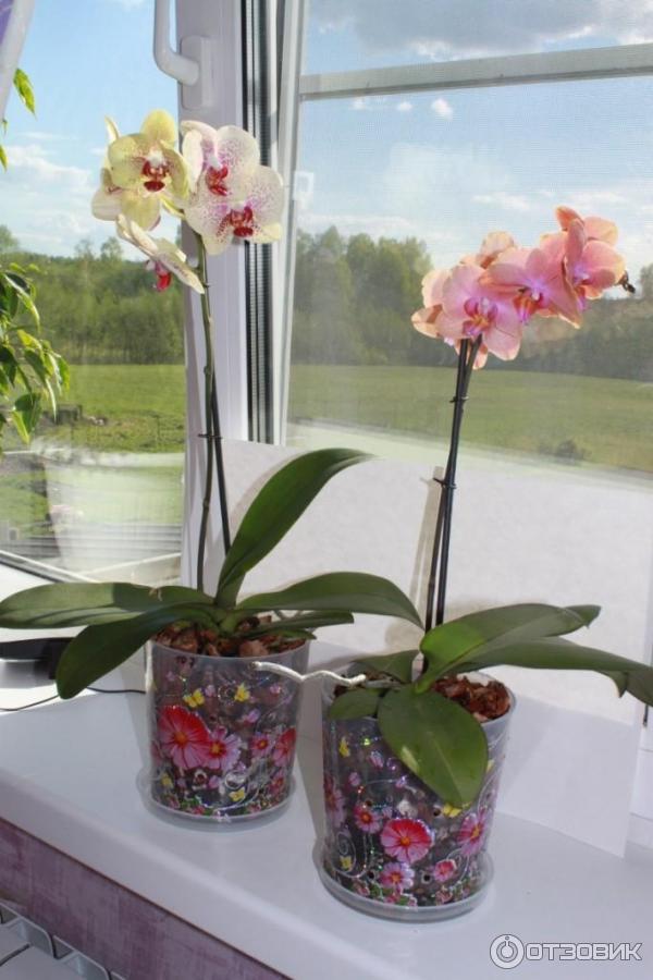 Какие горшки для орхидей нужны, как правильно выбрать емкость 5