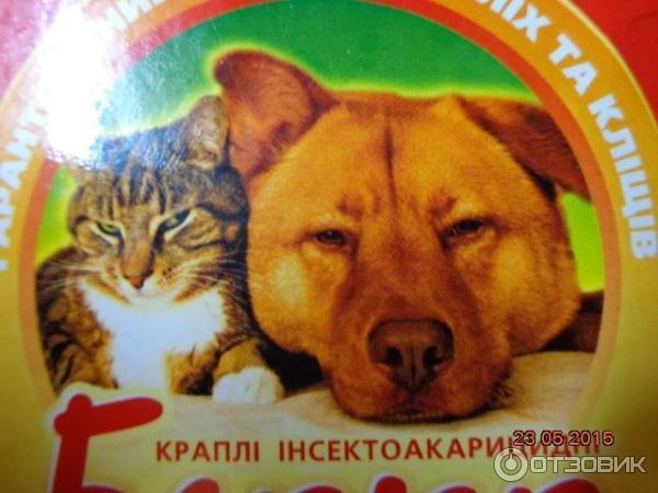 Корм для кошек Royal Canin / Роял Канин купить в каталоге