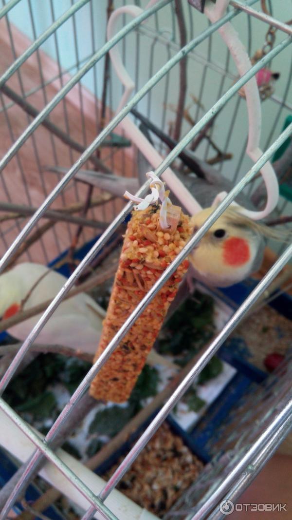 Как сделать лакомство для попугая своими руками 46