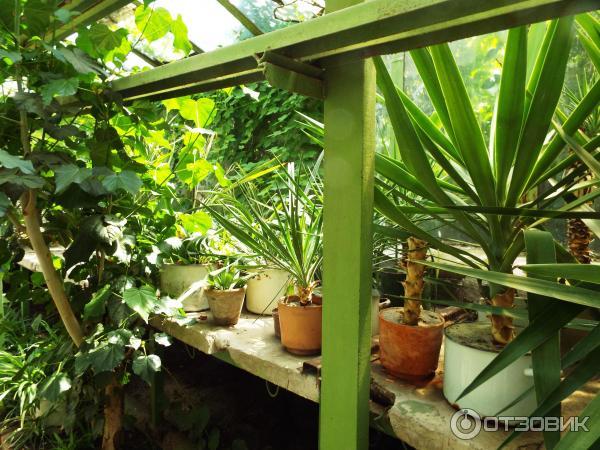 Ботанический сад ЮФУ (Россия, Ростов-на-Дону) фото