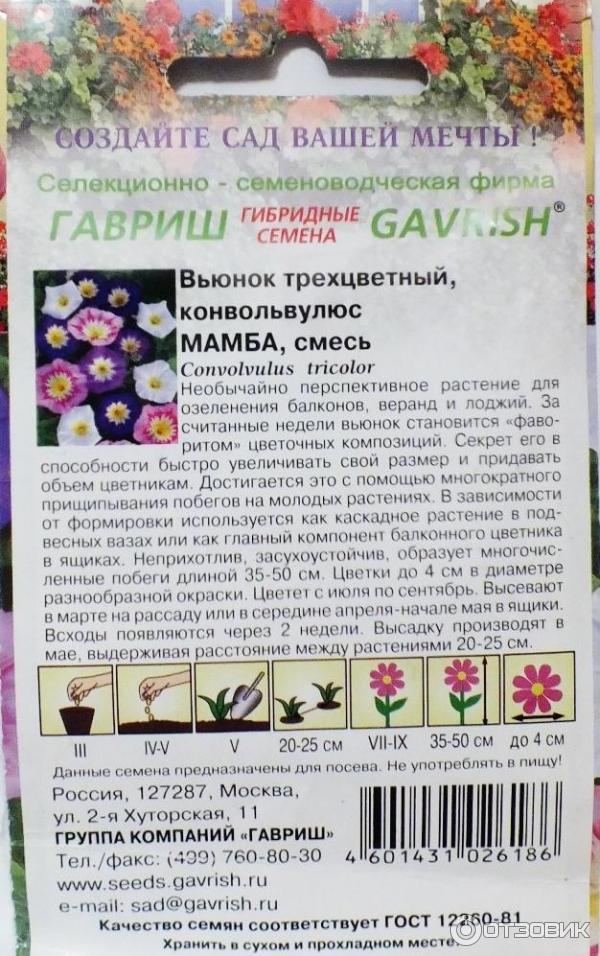 Вьюнок трехцветный выращивание из семян когда сажать 26