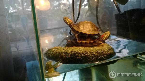 Как сделать плотики для черепах